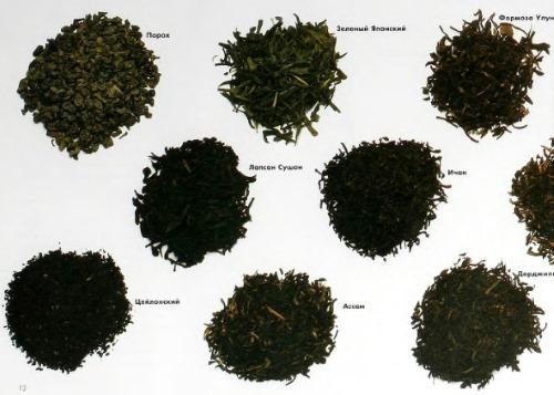 Классификация сортов чая