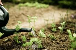 Садоводческие ошибки, которые никогда не делайте