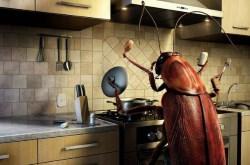 Как избавиться быстро от тараканов, используя природные решения