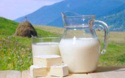 Усвояемость молока